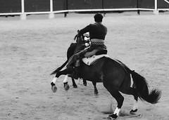 _DSC0598 (chris30300) Tags: france les cartagena corrida toro palavas rejon palavaslesflots flots languedocroussillonmidipyrnes languedocroussillonmidipyrn