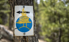 21 May 16 Acceptable Defacing (ethanbeute) Tags: forest colorado hiking hike coloradosprings hikingtrail pikenationalforest greenmountainfalls forested foresttrail catamounttrail catamountreservoir catamountcreek