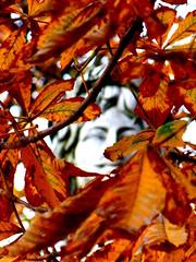 Le dieu de l'automne (Ali Devine) Tags: statue automne feuilles placedesvosges visage marronnier