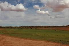Strzelecki after rain (Melissa Macgill) Tags: green rain desert g after outback sa southaustralia strzelecki