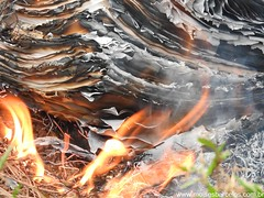 DSCN2506 (moisesbarcellos) Tags: life book power dancing flames books burn firedancing ember fier