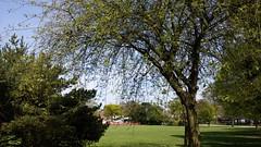 Sun shining at Kings Heath Park (ell brown) Tags: greatbritain trees england tree sunshine mobile birmingham unitedkingdom lg mobileshots westmidlands kingsheath avenuerd kingsheathpark vicaragerd vicaragerdkingsheath lgg3