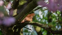Sleeping squirrel (jogi.sch) Tags: sleeping sun cute nature animal canon squirrel outdoor tired rare