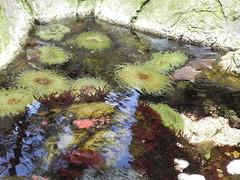 DSCN0355 (pablo.modo) Tags: portugal lisboa peces animales esponja acuario