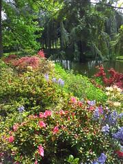 Arboretum de la Valle aux Loups (Chtenay-Malabri, Hauts-de-Seine, France) (frecari) Tags: flowers nature fleurs garden jardin iledefrance parc hautsdeseine