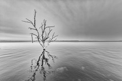Stump Lake 2.2 (Jack Lefor) Tags: blackandwhite lake nature water monochrome clouds landscape nikon moody loneliness fineart scenic peaceful minimal stump northdakota serene minimalism treestump stumplake nikond810