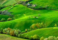 _DSC5110 (Giuseppe Cocchieri) Tags: trees color tree verde green primavera alberi landscape countryside spring colore hill valle hills campagna albero colori paesaggio colline collina vallata allaperto