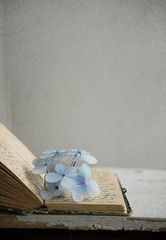 Diary (borealnz) Tags: blue flower book open pages diary hydrangea