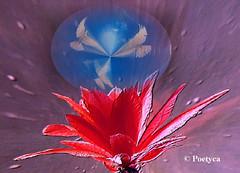 Frammenti dazzurro (Poetyca) Tags: featured image sfumature poetiche poesia