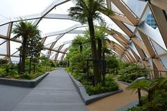 Green Apex (dhcomet) Tags: roof tree london garden flora top greenery canarywharf lattice crossrail ialeofdogs
