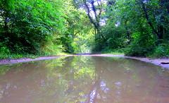 IMG_0061y (gzammarchi) Tags: strada italia natura paesaggio ravenna bosco riflesso pozzanghera marinaromea sterrato