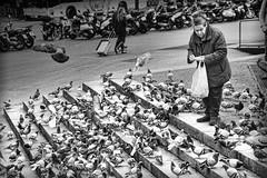 Una vida dedicada a las palomas (Black.Lion) Tags: street mujer paloma social tercera edad pobreza