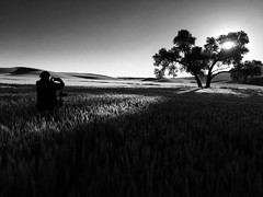France photographing her favorite tree near Steptoe Butte (MyLifesATrip) Tags: blackandwhite bw washington pullman palouse