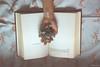 Korolenko & the ego* (M.B.*) Tags: canon photo wolfskurai melancholy ego book korolenko hydrangea whim languageofflowers