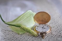 21:34 (Marisa y Angel) Tags: 2013bodegn stilllife naturemorte tabletop rejoj cala pocketwatch zantedeschiaaethiopica