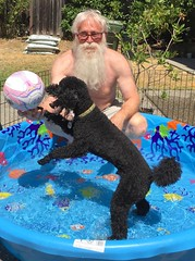 Poodle  In The Pool ! (outdoorPDK) Tags: pool poodle pascal