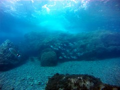 2016_0903_092623_001 (AAcero) Tags: buceo diving almera cabodegata isub