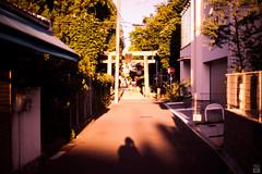 Evening/Shrine (yasu19_67) Tags: sunset sunlight evening shadow shrine alley bokeh atmosphere digitaleffects filmlook filmlike xequals xequalscolorslidefilms filmfake sony7ilce7 ebcfujinon50mmf14 50mm osaka japan