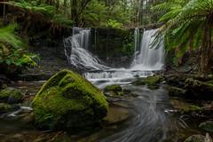 Horseshoe Falls (robertdownie) Tags: trees water rock tree rocks green waterfall australia moss cascades tasmania ferns tasmanian falls russell wilderness horseshoe mount field national park world heritage area