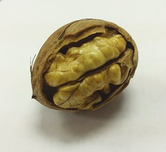 (RobertStok) Tags: walnut broken