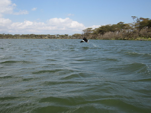 Lake Naivasha - 16 Aug 2016 - 4