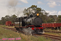 T251 Running Around - Drysdale (MattOatenVR) Tags: railroad red roses sun black beach coast seaside smoke south railway australia steam line locomotive coal peninsula signal lakers asg sar queenscliff mannum garratt drysdale bellarine t251