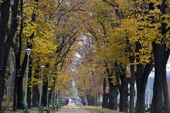 An autumn day in Carol Park, Bucharest, Romania (bbic) Tags: park november autumn trees alley colours