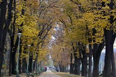 An autumn day in Carol Park, Bucharest, Romania (bbic) Tags: park november autumn trees alley colours