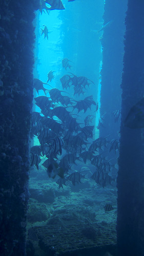 Old wives are very calm around divers in these parts, allowing for some wonderful photography opportunities
