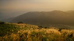 DSC01480 (a.lu.) Tags: sunset mountain scenery taiwan taipei miscanthus awn silvergrass datun japanesesilvergrass mtdatun