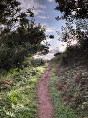 Molan-sur-Mer - 15-08-2014 - 19h04 (Panoramas) Tags: sea summer sky panorama cloud sun mer france clouds forest soleil brittany bretagne ciel t nuage nuages paysage towards chemin contrejour bois ptassembler multiblend