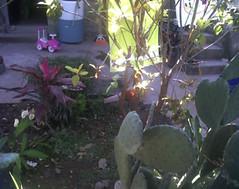 13 (tagresearchleon) Tags: santa colonia ursula