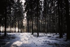 Eiswälder