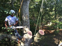 Outer Banks Tree Service