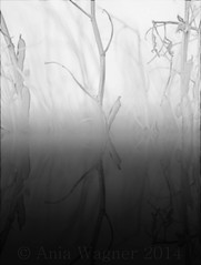 Underwater (aniawagner) Tags: sea blackandwhite monochrome grass see blackwhite weed wasser underwater unter gras whiteandblack blackandwhiteonly