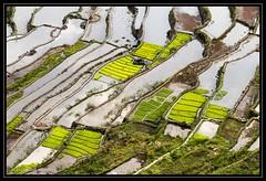Rice terraces / Ryzove terasy (JozefMindok) Tags: landscape rice philippines ryze banaue batad terasa terace krajina terasy filipiny ryzove
