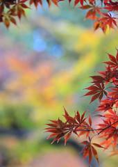 November (H. Samuel S.) Tags: 新宿御苑 coth bej abigfave diamondclassphotographer flickrdiamond coth5