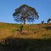 Tree in Esparanza - Nosara - Costa Rica