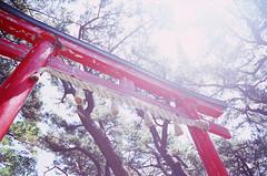 Takayamainari Shrine (Aqrtheta) Tags: japan shrine fuji contax aomori tsugaru fujivelvia100 takayamainari rtsii  distagon28mmf28