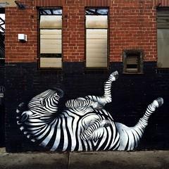 7/365 kicking back (retrokatz) Tags: zebra howler iphone365 2015pad