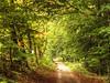 Green Tunnel in Forest (Habub3) Tags: green forest canon germany deutschland tunnel powershot grün wald g12 2015 buoch habub3