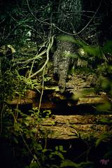 _MG_1240 (Alberto Montes Barajas) Tags: canon colombia pueblo 6d cundinamarca pandi