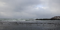 The Oga Peninsula (Jussi Salmiakkinen (JUNJI SUDA)) Tags: winter sea sky landscape cloudy seagull shore peninsula      akita   japani  oga japansea   ogapeninsula   tohhoku