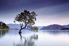 Lake Wanaka (angus clyne) Tags: new blue light lake mountains alps tree water grass landscape island dawn angus south calm southern zealand willow photograph hour growing wanaka arid southland clyne upland
