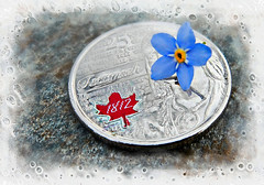 Forget-me-not---Smaller than a Coin. MM (Through Serena's Lens) Tags: blue red canada flower macro texture coin cents 25 forgetmenot mm currency mondays denomination smallerthanacoin