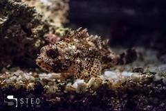 5D__5294 (Steofoto) Tags: genova porto pesci acquario darsena crostacei rettili cetacei molluschi