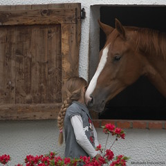Day 129 - Whispers (R@ffi) Tags: horse whispers stable cavallo scuderia sussurri