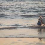 hond aan de zee thumbnail