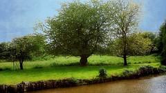 Au bord de l'eau (mamietherese1) Tags: alberoefoglia trolled phvalue