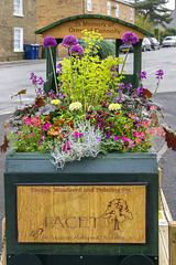 The Ormond Connolly Memorial Planter. (Kev Gregory (General)) Tags: road xmas england plant david max flower darren station train matt painting lights design march town woodwork memorial railway bloom worker annual member volunteer gregory planter kev barnes plinth founding apprentice stainless fenland woodshop instructor designed huntingdon in ormond facet abbs metalcraft connolly tovey chatteris manchett
